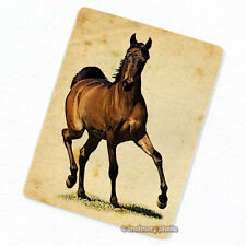 Horse #3 Deco Magnet, Decorative Gift Fridge Refrigerator Animal Illustration