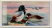 Scaup Duck Bird c90  Y/O Ad Trade Card