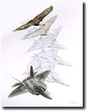Metamorphosis VII: Dominant  by Jody Sjogren - F-22 Raptor - Aviation Art Print