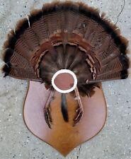 Vintage Wild Turkey Tail Feather Fan-Feet w/Spurs-Beard on Wood Shield Mount