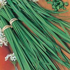 Chives  300 Seeds Heirloom Herb