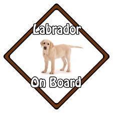 Dog On Board Car Safety Sign ?  Blonde Labrador On Board