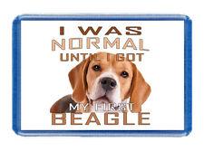 I Was Normal - BEAGLE - Large Size (7cm x 4.5cm) - Fridge Magnet For Dog Lovers