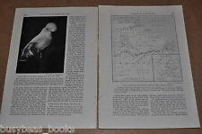 1933 magazine article about Brazil, Amazon explorations Orinoco natural history