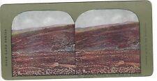 Vineyards on Terraced Hillside, Road to Bethlehem, Vintage Color Stereoview