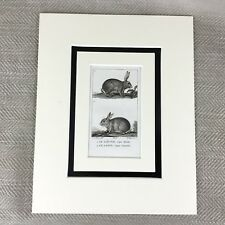 Antique Animal Print Rabbit Bunny Hare 18th Century French Engraving