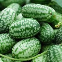 10 stücke Mini Daumen Wassermelone Samen Hause Gepflanzt A4N6 Obst-Samen Y4Y8
