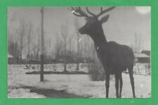 Deer Comes to Visit - Vintage Black and White postcard