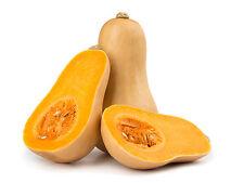 20++ Organic Waltham Butternut Winter Squash Seeds NON-GMO