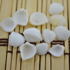 20pcs Tiny Sea Shells Scallop Fan Shells Ornament DIY Crafts Nautical Decor