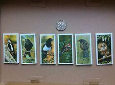 More details for craven black cat set of 50 british birds. brand new