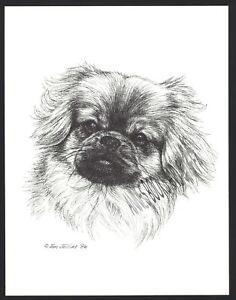 #374 TIBETAN SPANIEL  portrait dog art print * Pen and ink drawing * Jan Jellins