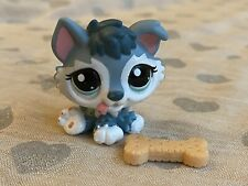 Littlest Pet Shop lps RARE grey HUSKY #2036 with ACCESSORY