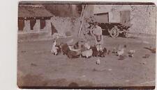 PHOTO ANCIENNE/FERME-BASSE-COUR-FILLETTE/TABLIER Donnant à manger à ses POULES/