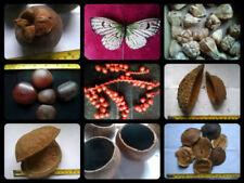 Dried Seeds