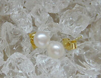 ✨Fine✨  Ohrringe in aus 14kt 585 Gold mit Perle Ohrstecker Perlen pearl earrings