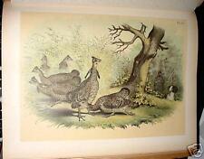 GROUSE STUDER-JASPER BIRDS OF AMERICA 1878 PRINT