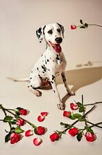 GILLIE AND MARC -direct from the artist- authentic photographic print Pup Art