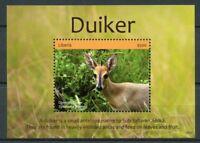 Liberia 2018 MNH Duiker 1v S/S Antelopes Mammals Wild Animals Stamps