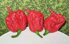 25 Carolina Reaper Seed Red Hot Peppers Vegetables Seeds EXTREME HOT rated #1