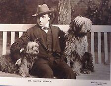 1908 photo postcard Martin Harvey Bearded Collie Sheepdog dog Skye Terrier