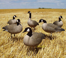AVERY GREENHEAD GEAR GHG TIM NEWBOLD LESSER CANADA GOOSE ACTIVE DECOYS 6 NEW