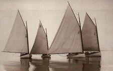 """ Win or Lose "" Cat Boats, Cat-Rigged Sailboats on a Calm Sailing Day - Postcard"