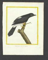18th Century Buffon & Martinet Bird Print from Histoire Naturelle des Oiseax