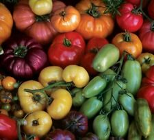 TOMATO 'Heirloom Mix' 30+ seeds green red pink fruit vegetable garden heritage