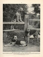AIREDALE TERRIER ORIGINAL VINTAGE 1930's DOG PRINT PAGE THREE POLICE DOGS