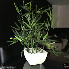 Artificial INDOOR POTTED BAMBOO PLANT IN DISTRESSED CREAM Ceramic Planter 45CM