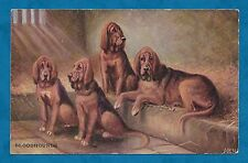 C1910'S PC ARTIST DRAWN BLOODHOUNDS - ALPHA PUBLISHING CO - DOGS