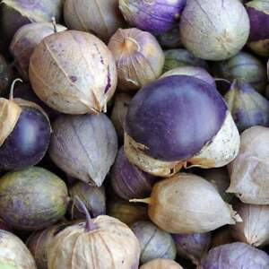 Purple Tomatillo Seeds 50 Ct Vegetable Salsa HEIRLOOM NON-GMO USA FREE SHIPPING