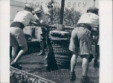 Workers Manually Turning Grape Press Press Photo