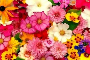 COTTAGE GARDEN MIX 350+ seeds colourful flower EASY TO GROW meadow bare patch