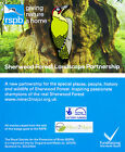 RSPB Pin Badge | Green Woodpecker | Sherwood Forest partrnership [01186]