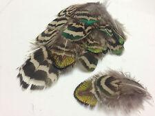 10 Varigated & Mottled 3-6cm Peacock Body Plumage Feathers DIY Craft Flyfishing