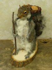 Hiking Squirrel Professional Taxidermy Mounted Animal Statue Home &Office Gift
