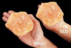 "Orange Calcite 4""-5"" 2 Pound NATURAL Rocks and Minerals Specimen Healing Crystal"