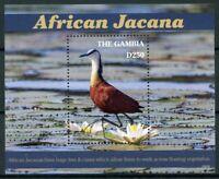Gambia 2019 MNH African Jacana 1v S/S Jacanas Birds Stamps