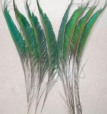 10  Schwert  Pfauenfedern,Federn.ca.30-35 cm. Pfau Feder.Kostüme,Deko