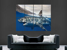 Grand requin blanc mur de Mer Poster Art Photo Impression Grand énorme