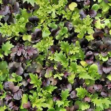 1g (500pcs) mixed Leaf Salad Organic Green Vegetable seeds