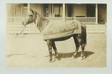 RPc1910 ADVERTISING Trick Horse BOBBY THE EDUCATED HORSE Trained Circus Sideshow