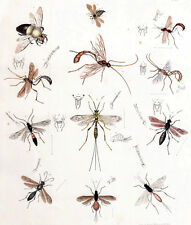 1850's vintage INSECTS original handpainted engraving - Plate #27
