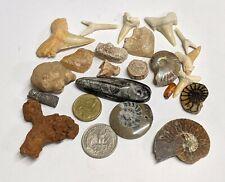 FOSSIL COLLECTION - Dinosaur Ammonite Shark Snake Stingray Orthoceras (#U364)