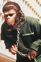 Conquest of the Planet of the Apes Roddy McDowall in chains 11x17 Mini Poster