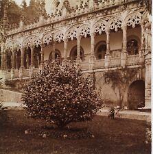 Jardin de Buçaco Portugal Plaque de verre stereo Positif Vintage