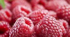 20 50 100 250 1000 - RASPBERRY SEEDS Wild Sweet Red Fruit Bush Plant Veggie AUST