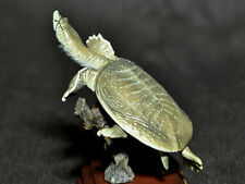 "Nature Techni Colour Turtle Gashapon "" Chinese soft shelled trutle """